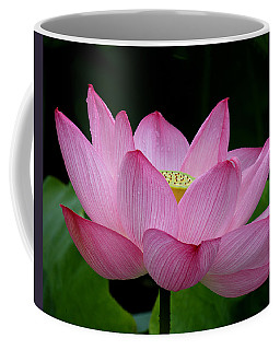 Lotus-center Of Being IIi Dl033 Coffee Mug