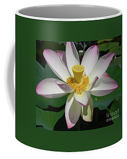 Coffee Mug featuring the photograph Lotus Flower by Chrisann Ellis