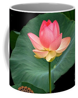 Lotus Of Late August Coffee Mug by Byron Varvarigos