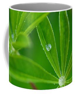 Lupine Dreams Coffee Mug