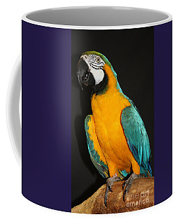 Coffee Mug featuring the photograph Macaw Hanging Out by John Telfer
