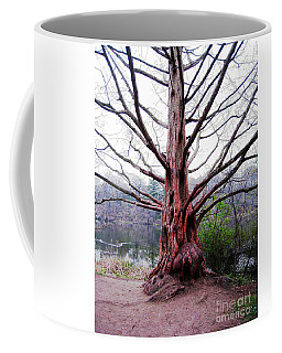 Coffee Mug featuring the photograph Magic Tree by Nina Silver