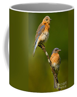 Male And Female Bluebirds Coffee Mug by Jerry Fornarotto