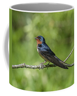 Male Barn Swallow Hirundo Rustica Dsb262 Coffee Mug