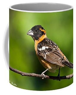 Male Black Headed Grosbeak In A Tree Coffee Mug by Jeff Goulden
