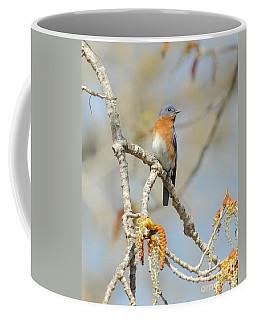 Male Bluebird In Budding Tree Coffee Mug