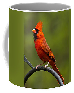 Male Cardinal Coffee Mug