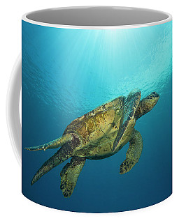 Male Green Sea Turtles  Chelonia Mydas Coffee Mug