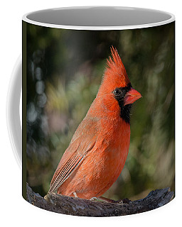 Male Northern Cardinal 3 Coffee Mug