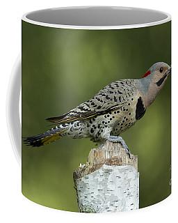 Male Northern Flicker Coffee Mug