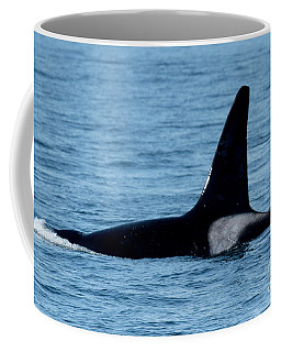 Coffee Mug featuring the photograph Male Orca Killer Whale In Monterey Bay 2013 by California Views Mr Pat Hathaway Archives