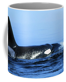 Coffee Mug featuring the photograph Male Orca Off The San Juan Islands Washington 1986 by California Views Mr Pat Hathaway Archives