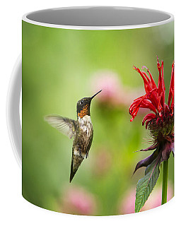 Male Ruby-throated Hummingbird Hovering Near Flowers Coffee Mug by Christina Rollo