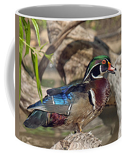 Male Wood Duck Dwf029 Coffee Mug