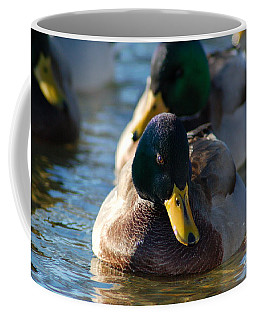 Mallard In The Morning Sun Coffee Mug by Patrick Shupert