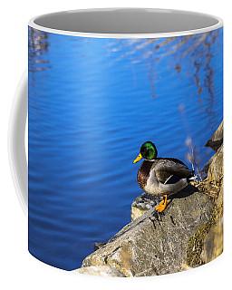 Mallard Looking Over His Domain Coffee Mug