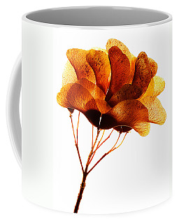Maple Seed Pod Cluster Coffee Mug