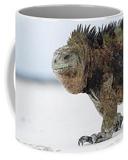 Marine Iguana Male Turtle Bay Santa Coffee Mug