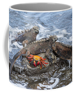 Marine Iguana Trio And Sally Lightfoot Coffee Mug