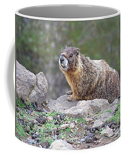 Coffee Mug featuring the photograph Marmot On The Edge by Charles Robinson