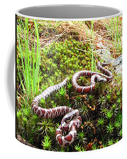 Mountain Milk Snakes Coffee Mug