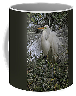 Mating Plumage Coffee Mug by Deborah Benoit
