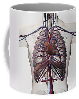 Medical Illustration Of Male Chest Coffee Mug