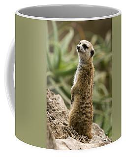 Coffee Mug featuring the photograph Meerkat Mongoose Portrait by David Millenheft