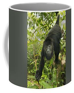 Mexican Black Howler Monkey Belize Coffee Mug