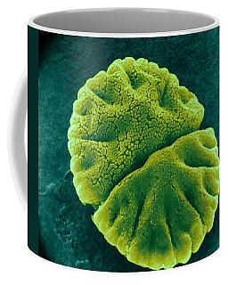 Coffee Mug featuring the photograph Micrasterias Angulosa, Algae, Sem by Science Source
