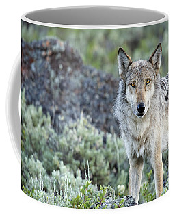 Middle Gray Of Yellowstone Coffee Mug