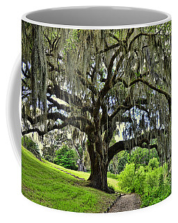 Middleton Place Oak  Coffee Mug by Allen Beatty