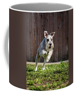 Coffee Mug featuring the photograph Miniature Schnauzer by Michael Chatt