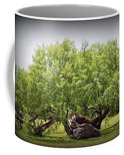 Mission Espada - Tree Coffee Mug by Beth Vincent