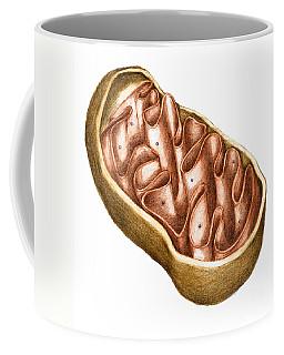 Mitochondria Coffee Mugs | Fine Art America
