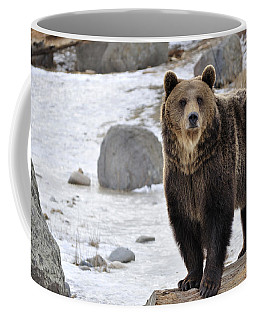 Montana Grizzly  Coffee Mug by Fran Riley