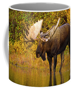 Moose In Glacial Kettle Pond  Coffee Mug