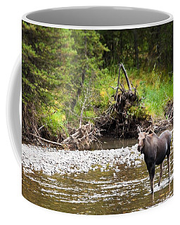 Coffee Mug featuring the photograph Moose In Yellowstone National Park   by Lars Lentz