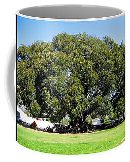 Moreton Fig Tree In Santa Barbara Coffee Mug