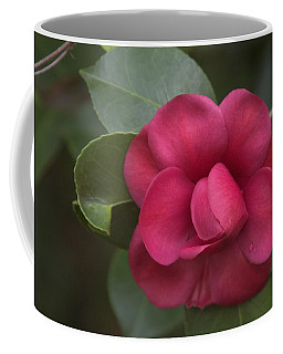 Coffee Mug featuring the photograph Morning Camellia by Penny Lisowski