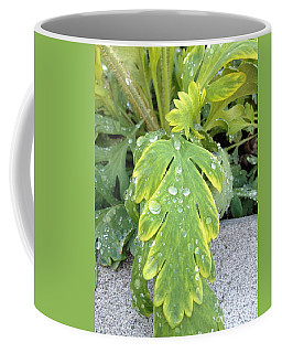 Coffee Mug featuring the photograph Mornings Dew by Margie Amberge
