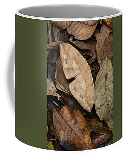 Moth Camouflaged Against Leaf Litter Coffee Mug