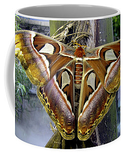 Atlas Moth Coffee Mug