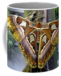 Atlas Moth Coffee Mug