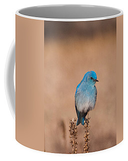 Coffee Mug featuring the photograph Mountain Bluebird by Cascade Colors