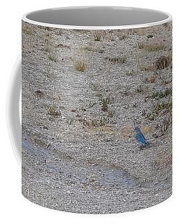 Coffee Mug featuring the photograph Mountain Bluebird  by Lars Lentz