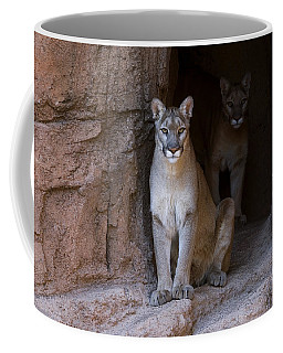 Coffee Mug featuring the photograph Mountain Lion 1 by Arterra Picture Library