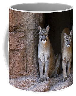 Coffee Mug featuring the photograph Mountain Lion 2 by Arterra Picture Library