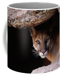 Mountain Lion Peering From Cave Coffee Mug