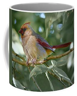 Mrs. Cardinal Coffee Mug